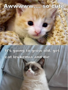 Awww... so cute It's going to grow old, get cat leukemia and die