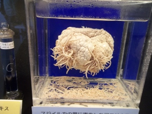 A display at the Meguro parasite museum